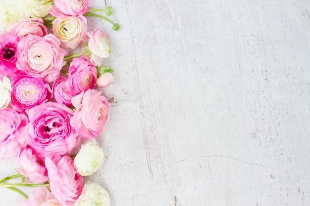 Rosa und weiße ranunkelblütenknospen begrenzen auf gealtertem weißem holz