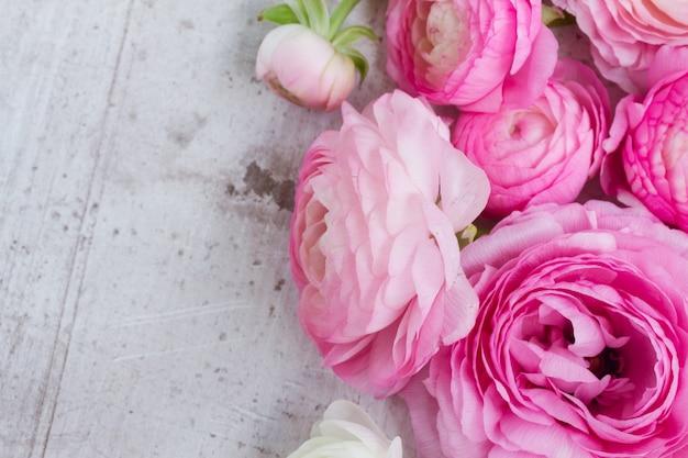 Rosa und weiße ranunkelblumen auf weißem hölzernem hintergrund