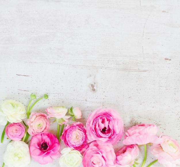 Rosa und weiße ranunkelblumen begrenzen auf gealtertem weißem hölzernem desktop