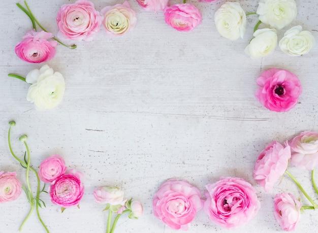 Rosa und weiße ranunkelblumenrahmen auf flacher laienszene des weißen hölzernen hintergrunds