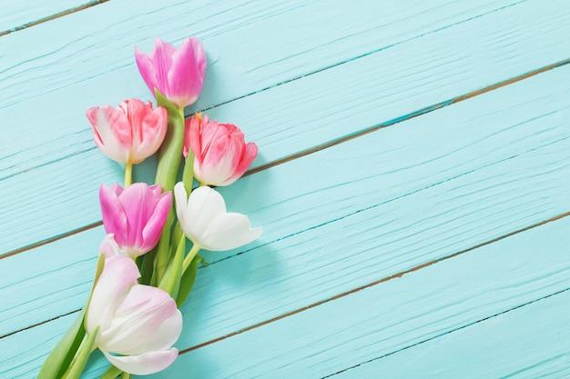 Rosa und weiße tulpen auf blauem holztisch