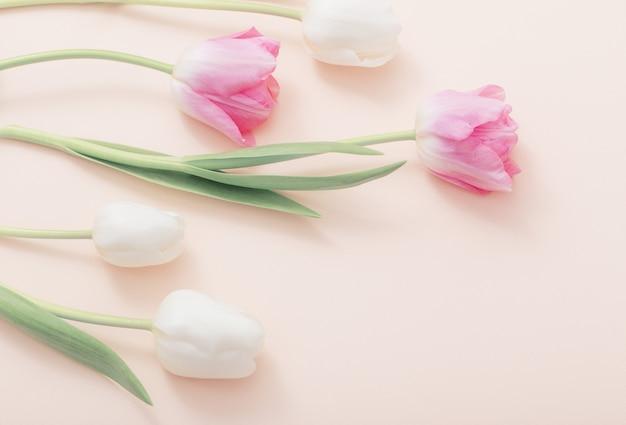 Rosa und weiße tulpen auf papierhintergrund