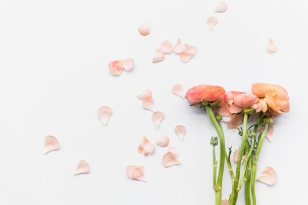 Rosa wundervolle blumen auf stielen