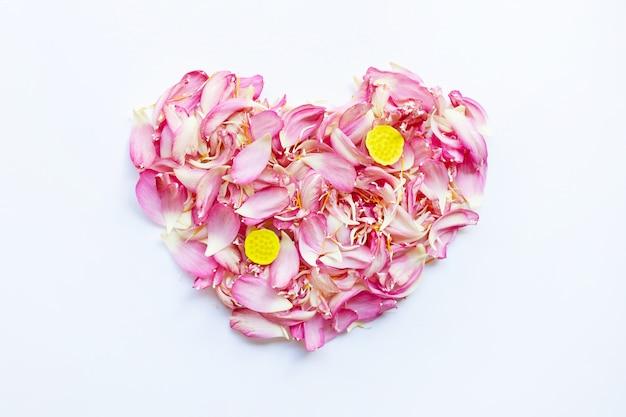 Rosafarbene lotosblumenblätter auf weiß.