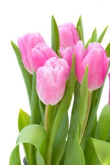 Rosafarbene tulpen