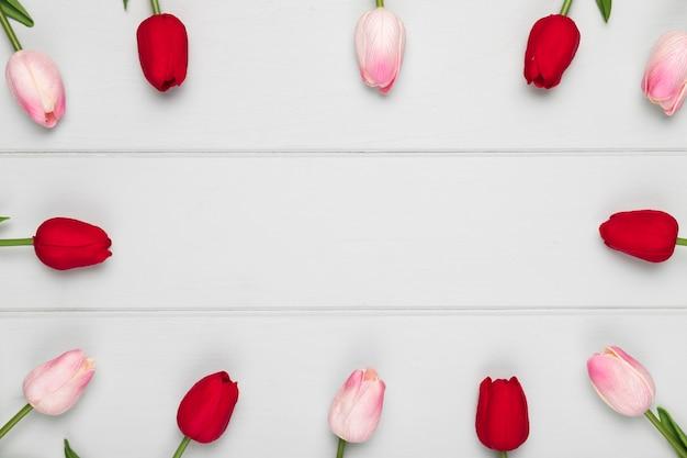 Rosafarbenes und rotes tulpefeld mit exemplarplatz
