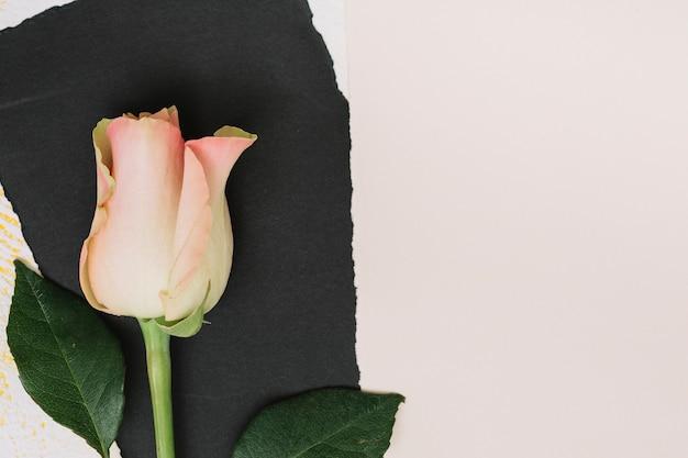 Rosarosenblume mit schwarzem papier auf weißer tabelle