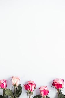 Rosarosenblumen auf leuchtpult