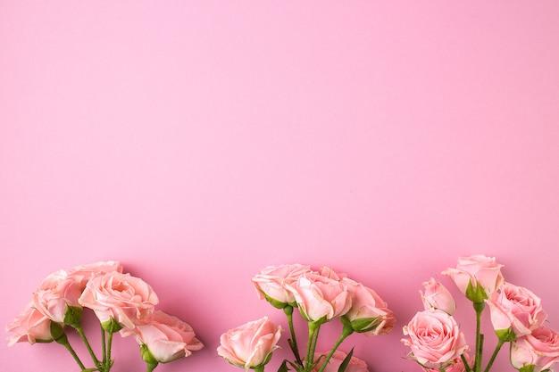 Rosarosenblumen auf pastellrosahintergrund
