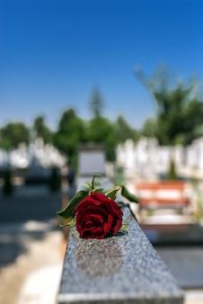 Rose auf einem friedhof mit grabstein