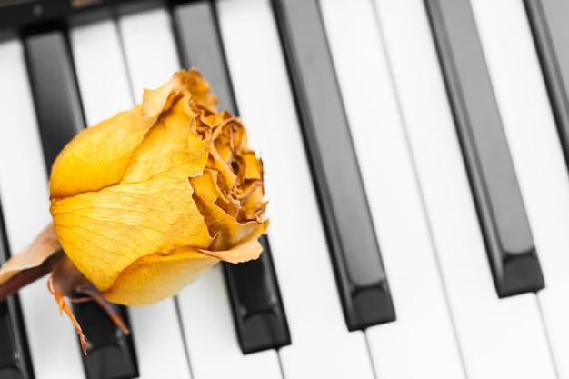 Rose auf einem klavier