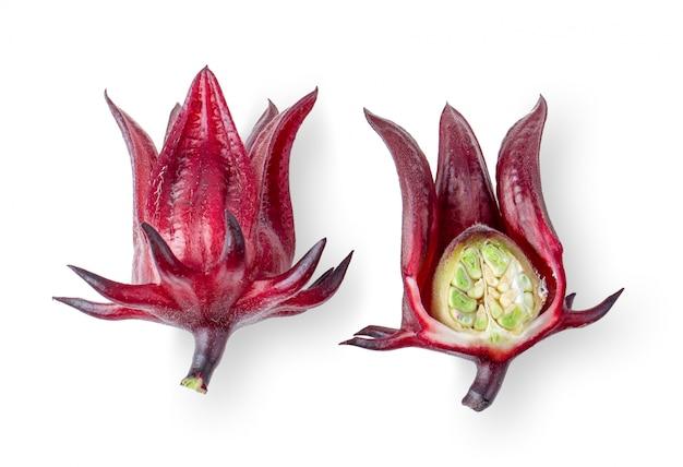Roselle hibiskus isoliert geschnitten