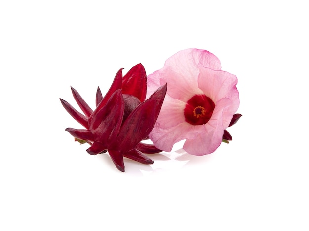 Roselle hibiskus lokalisiert auf weißem hintergrund