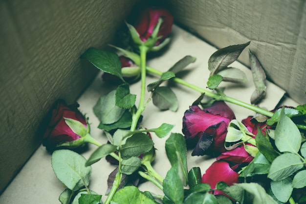 Rosen-blumen in den alten rosen des paketkastens auf mülleimer brechen meine herz entleerte liebe auf valentinstagkonzept