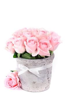 Rosen in einem topf