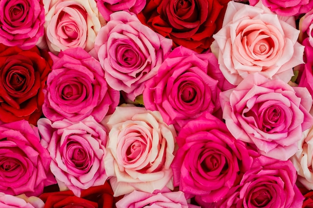 Rosen und ein tag der liebe und familie