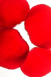 Rosenblätter, karte, geschenk