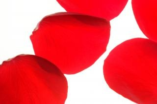 Rosenblätter, sinnlich, geburtstag
