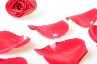 Rosenblüten, vorschlag, paar