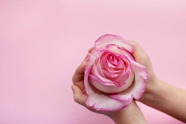Rosenblume in den händen eines mädchens auf einem rosa hintergrund mit platz für text
