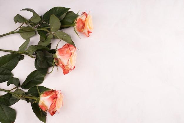Rosenblumen auf weißer tabelle