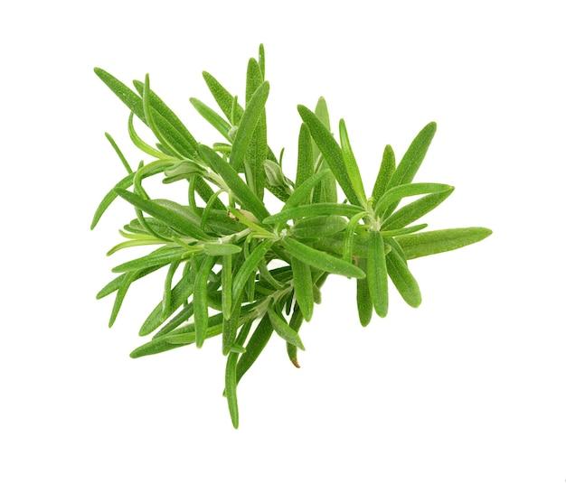 Rosmarinzweig mit grünen blättern auf weißem hintergrund, aromatisches gewürz für fleisch und suppen