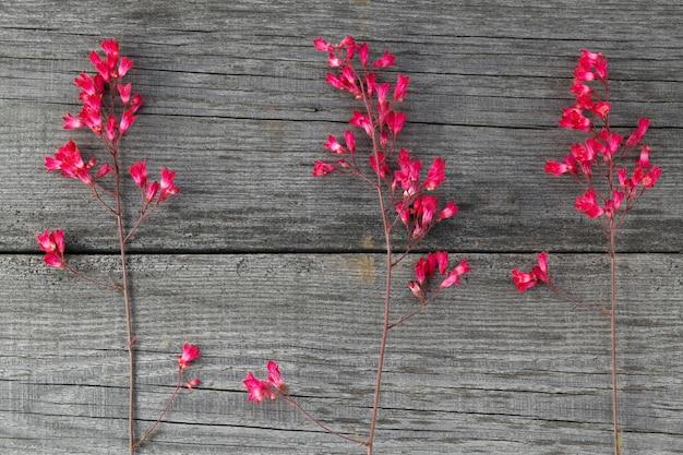 Rot blühende blume heuchera auf den alten brettern mit einer textur.