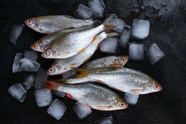 Rotaugenfisch oder rutilusfisch auf schwarzer metalloberfläche mit eisstücken