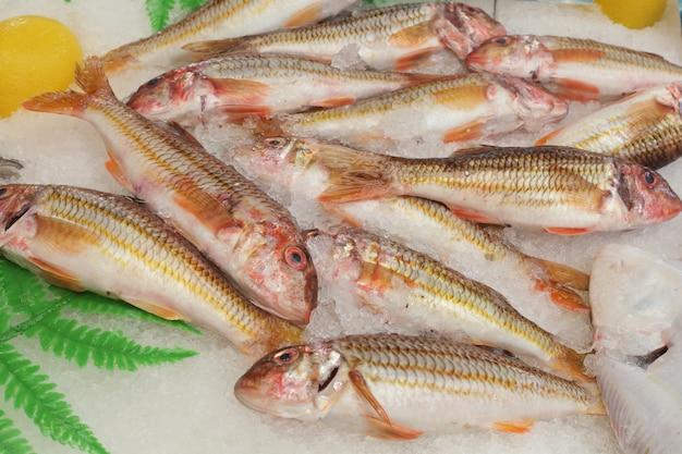 Rotbarbenfisch auf dem markt