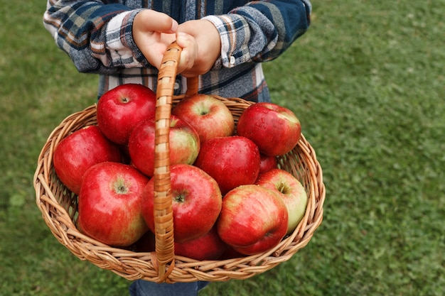 Rote äpfel in einem korb in den händen eines kindes