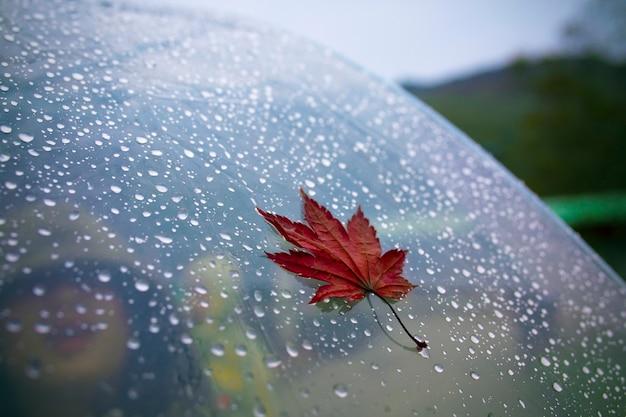 Rote ahornblätter auf regenschirm