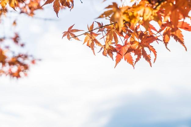 Rote ahornblätter blühen