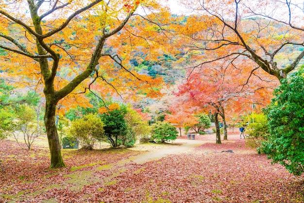 Rote ahornblätter, die bei arashiyama blühen