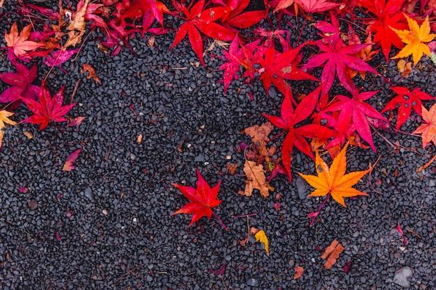 Rote ahornblätter fällt auf asphaltstraße mit platz für text