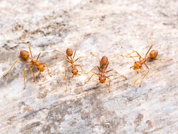 Rote ameisengruppe jagt nach bedrohung