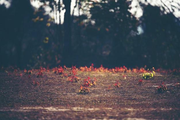 Rote anlage, blume und blatt, waldlandschaft