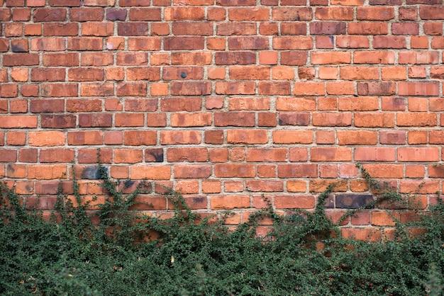 Rote backsteinmauer und büsche im park