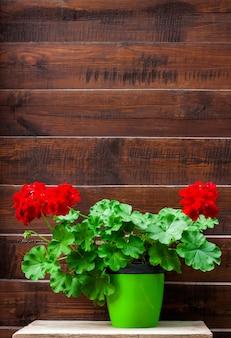 Rote blühende pelargonie in einem topf auf der hölzernen zaunoberfläche