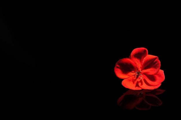 Rote blume auf dem schwarzen klavier