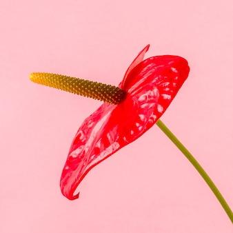 Rote blume auf einer hellen farbe.