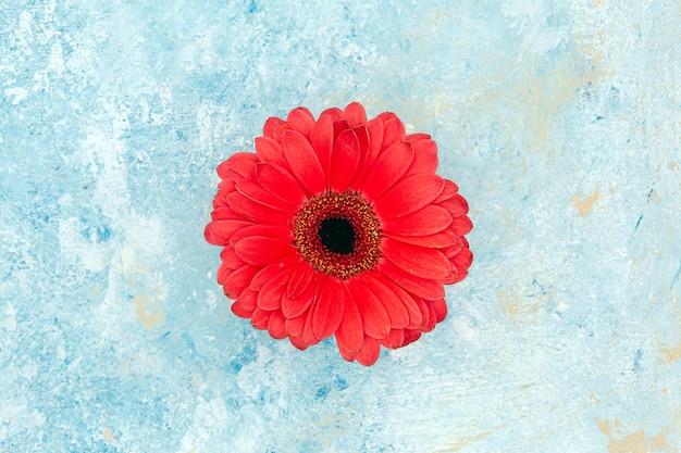 Rote blume des frischen frühlings über blauem strukturiertem hintergrund