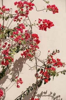 Rote blumen auf beige wand mit sonnenlichtschatten