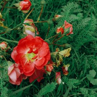 Rote blumen auf der straße. konzeptkunst für pflanzenliebhaber