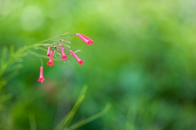 Rote blumen auf einer grünen natur, die ersten frühlingsblumen.