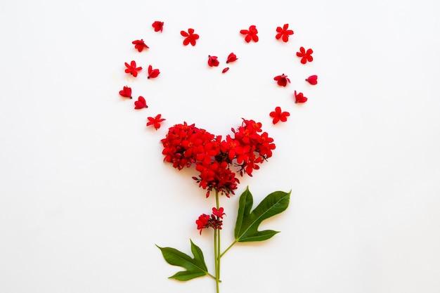 Rote blumen rubiaceae anordnung herzen postkarte stil