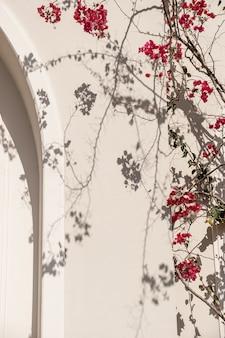 Rote blumenpflanzenzweige und sonnenlichtschatten auf neutraler beige wand.