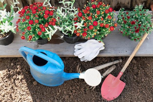 Rote chrysanthemen in den blumentöpfen mit gartengeräten, die bereit sind, im frühlingsgarten in die erde zu pflanzen
