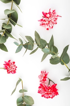 Rote chrysanthemenblumen und -zweige auf weißem hintergrund