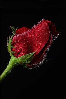 Rote einzelne rose auf schwarzer oberfläche