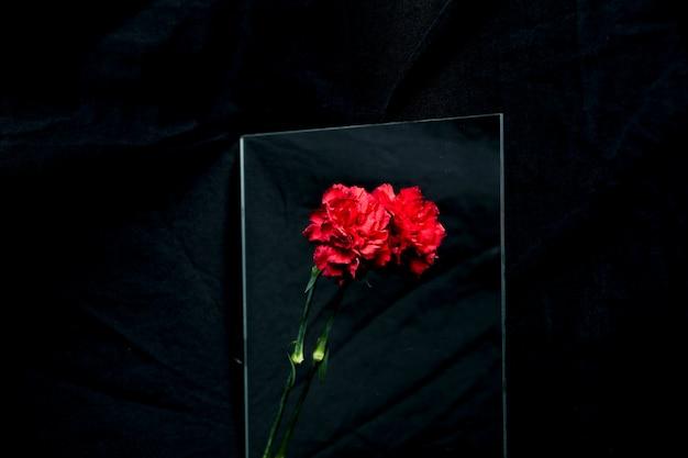 Rote gartennelkenblume, die über glas über schwarzem hintergrund nachdenkt